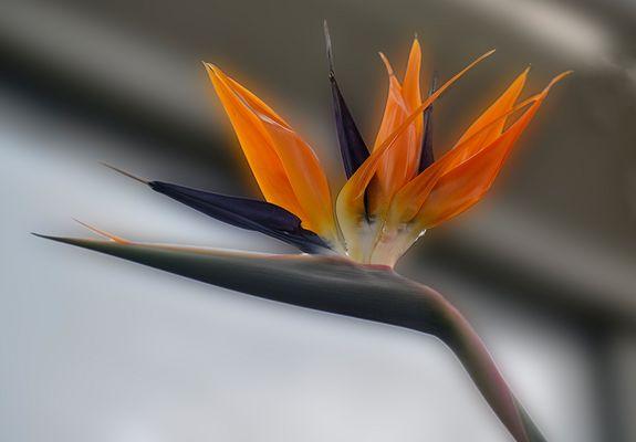 Vogelähnlich