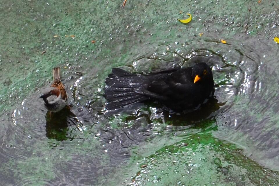 Vogelbad 3