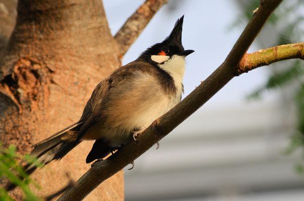 Vogelbestimmung..