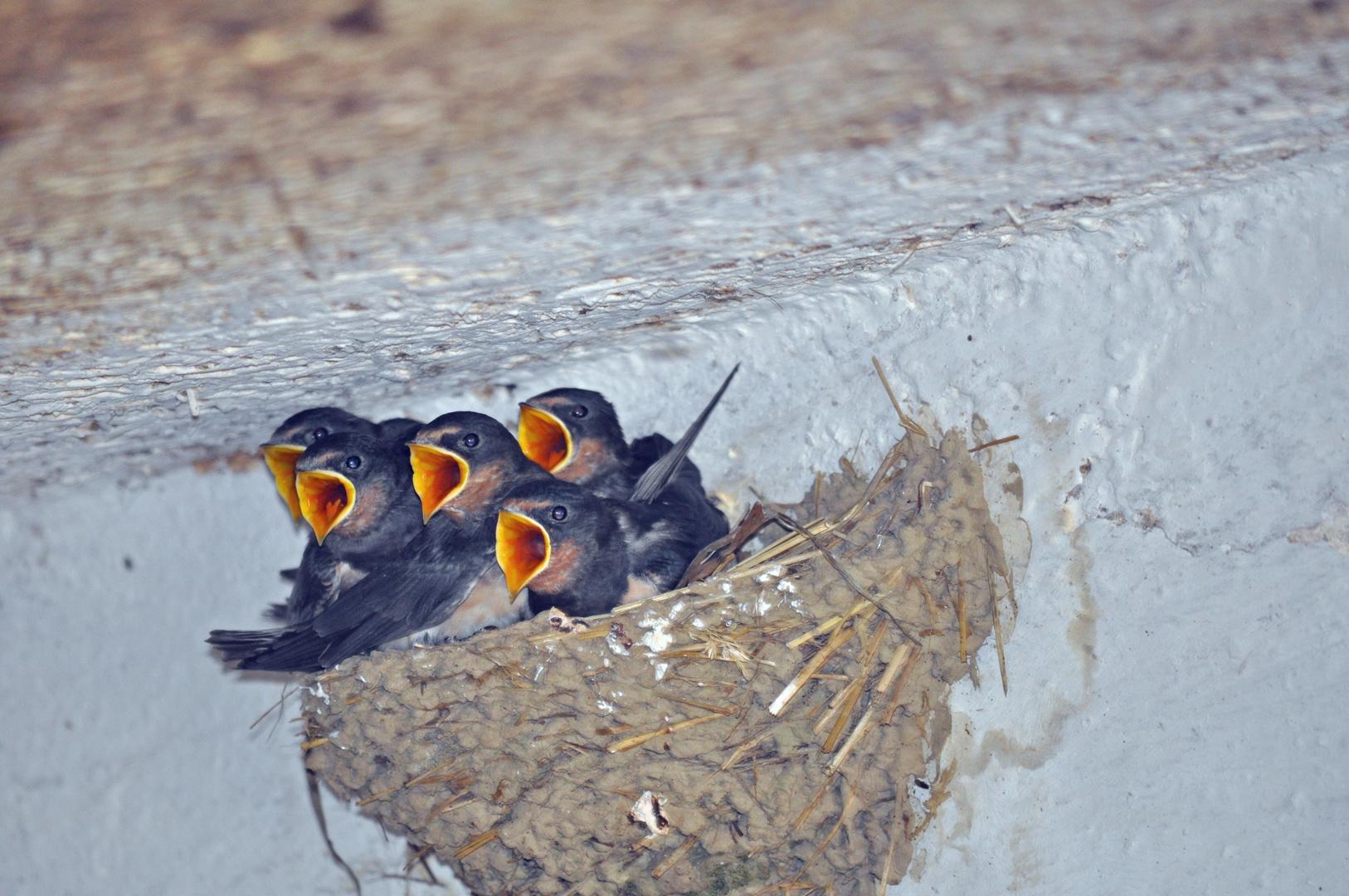 Vogelchor