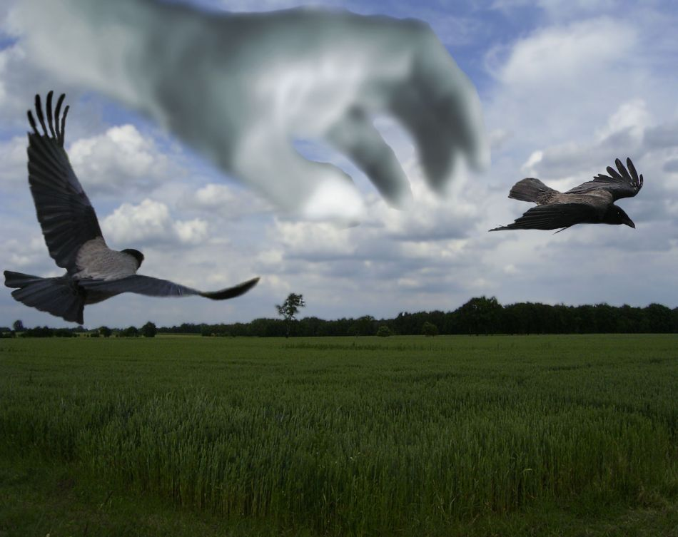 Vogelfänger