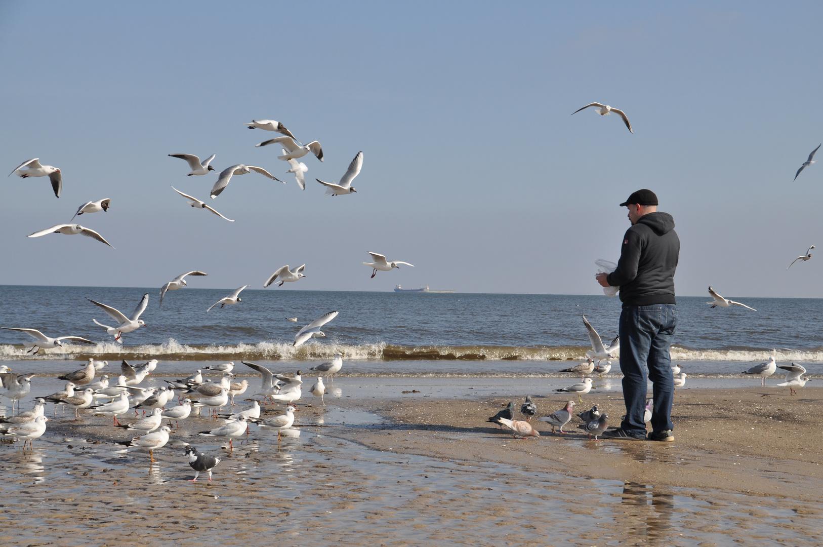 Vogelfan an der Ostsee