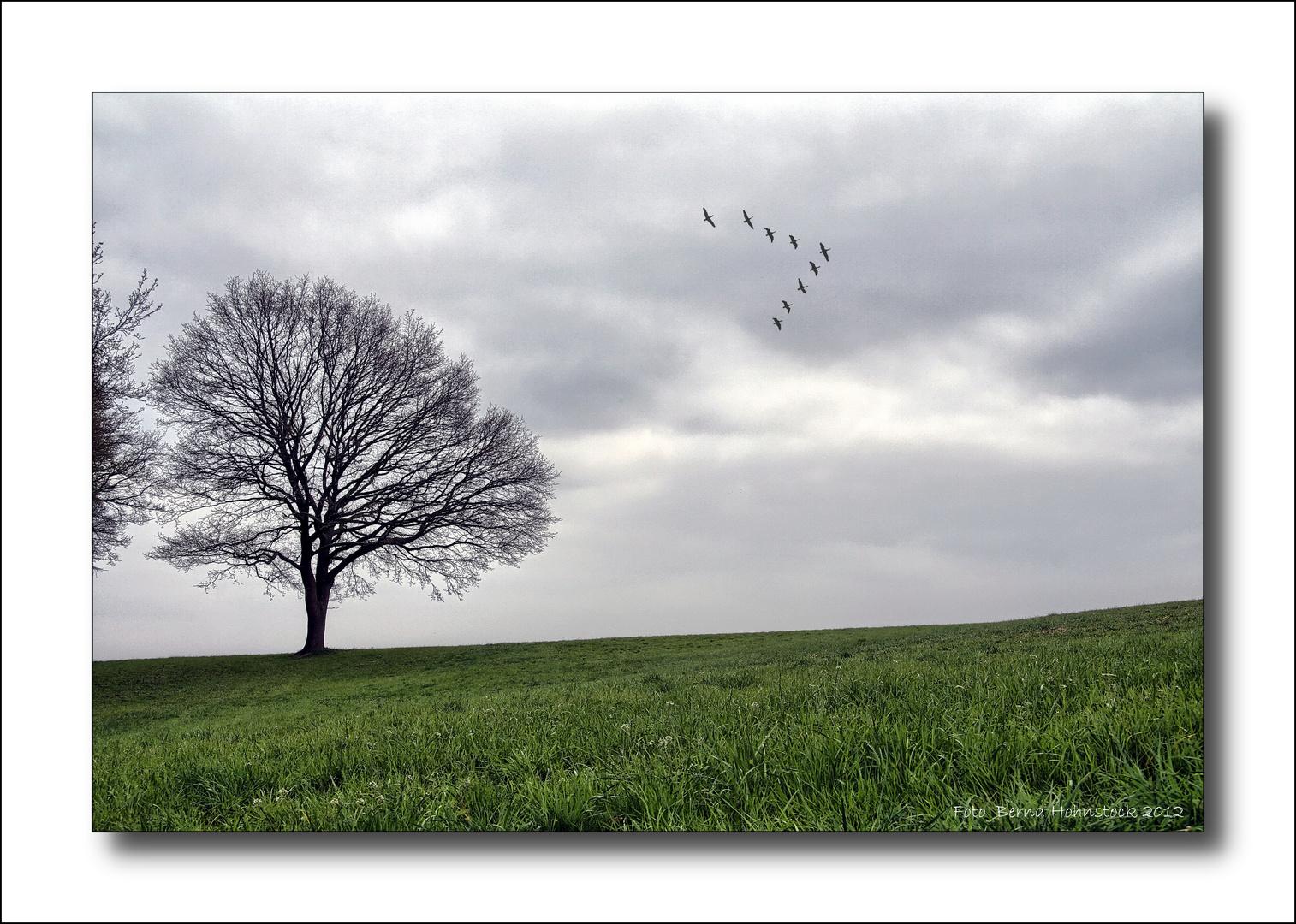 Vogelflug ....