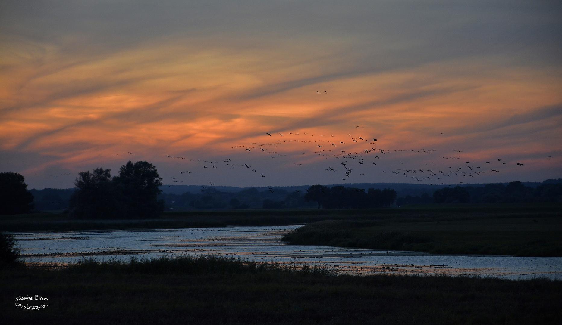 Vogelflug bei Sonnenuntergang