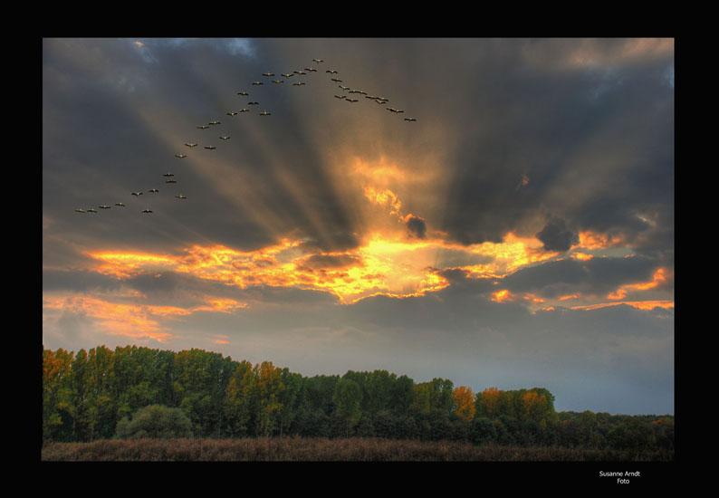 Vogelflug im Abendschein