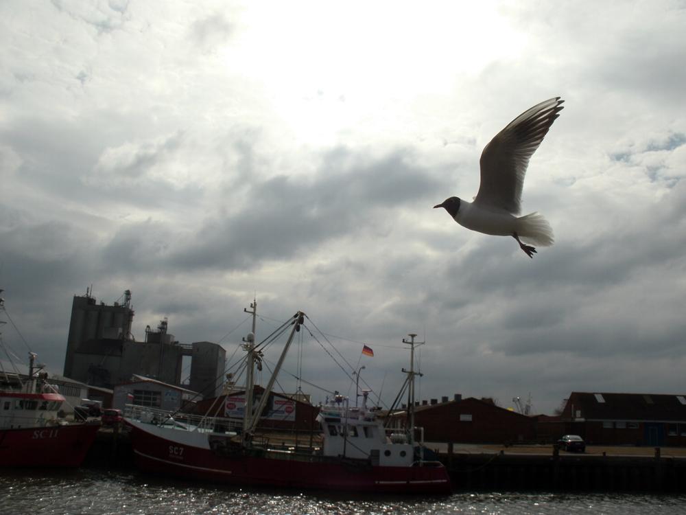 Vogelflug im Hafen von Büsum