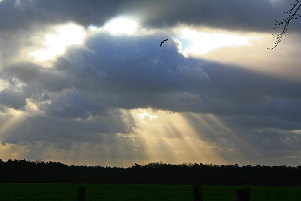 - Vogelflug Richtung Himmeltor-