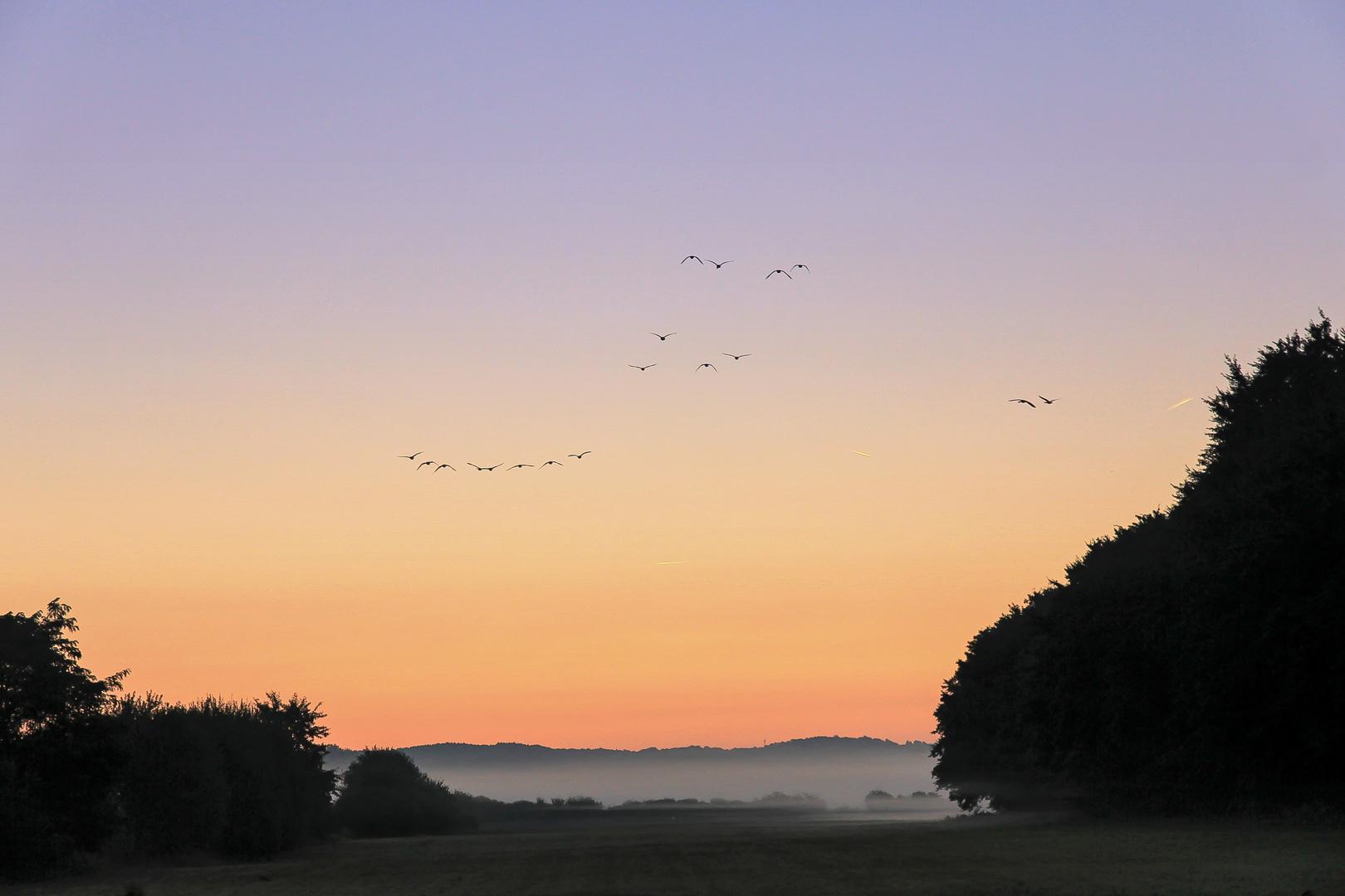 Vogelfluglinie II