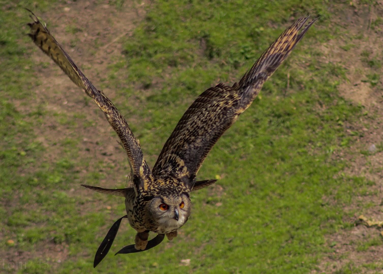 Vogelflugschau