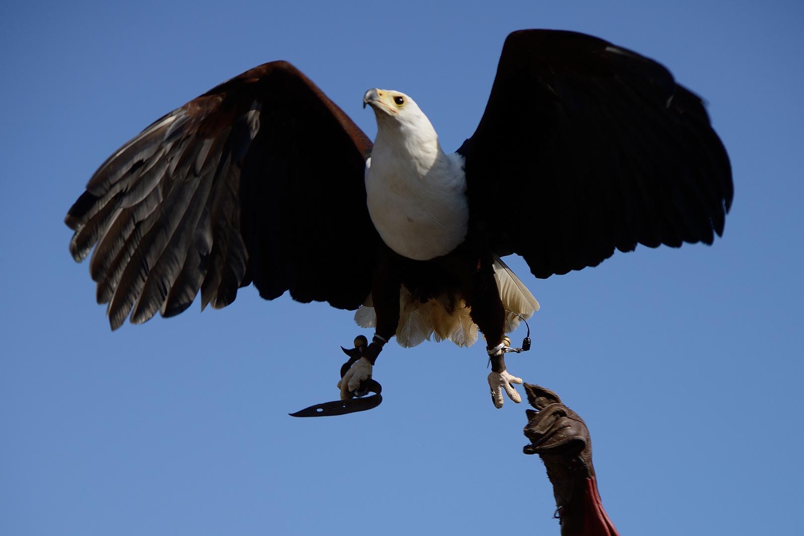 Vogelflugschau 2