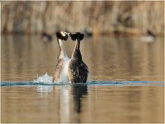 Vogelfotografen-Pflicht-Foto