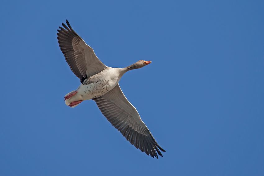 Vogelfreiheit