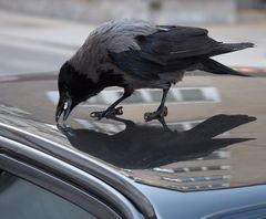 vogelfutter am autodach