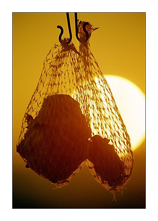 Vogelfutter im Sonnenuntergang