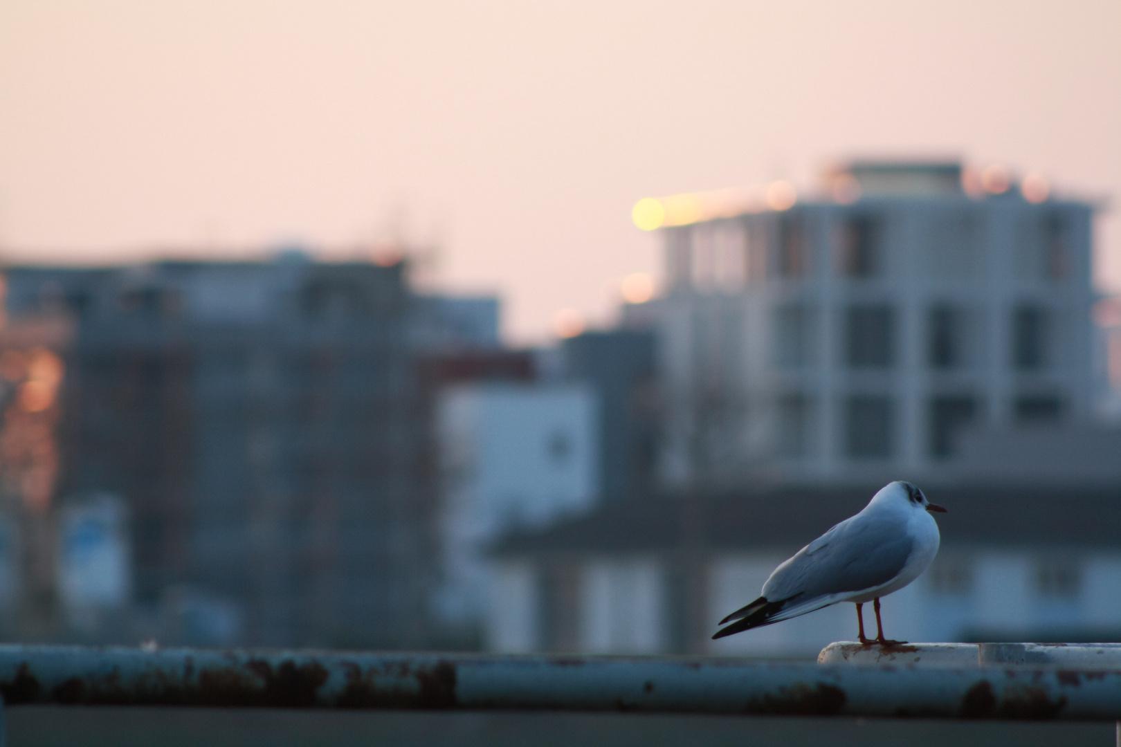 Vogelgedanken
