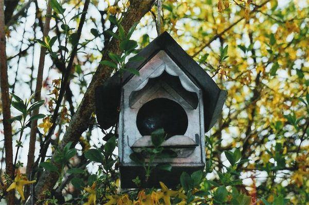 Vogelhäuschen