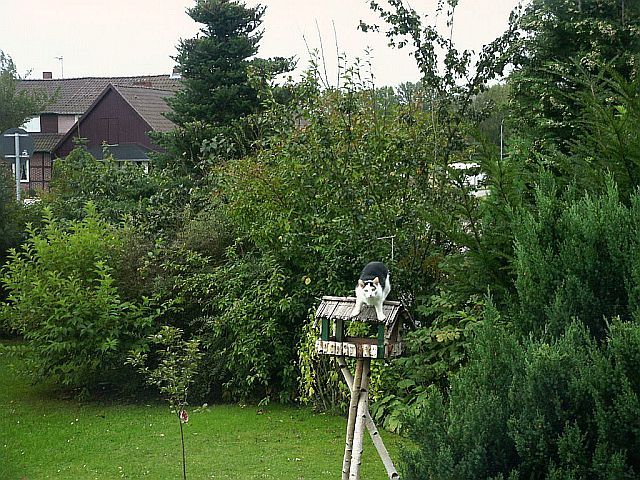 Vogelhaus Inspektion