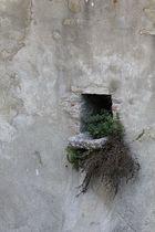 Vogelhotel im Schloss von Sirmione