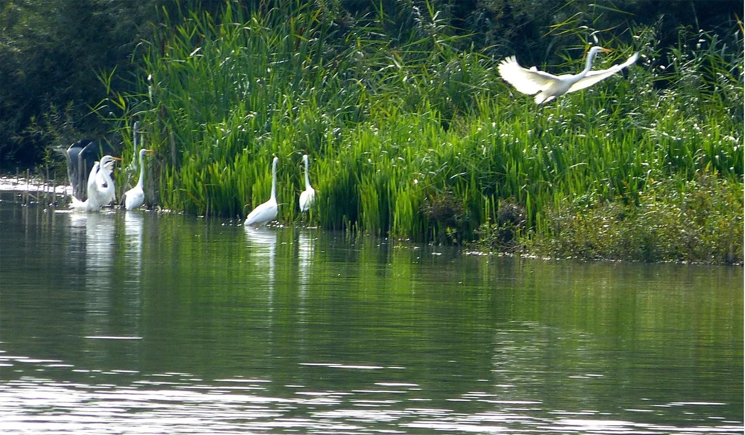 Vogelinsel 12