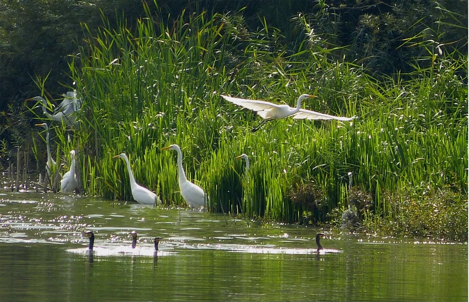 Vogelinsel 3