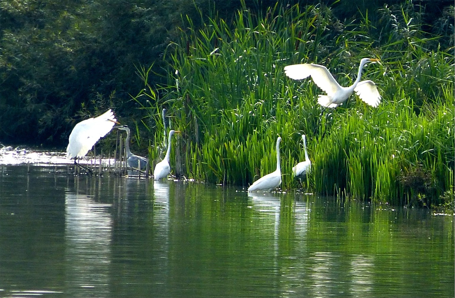 Vogelinsel 6