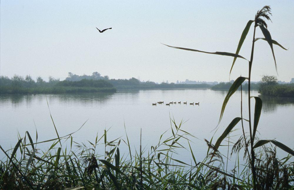 Vogelinsel im Altmühlsee