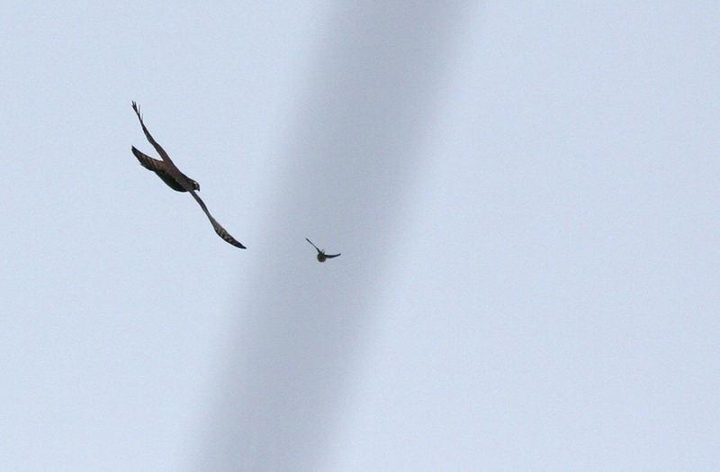 Vogeljagd unterm Kerosinstreif?
