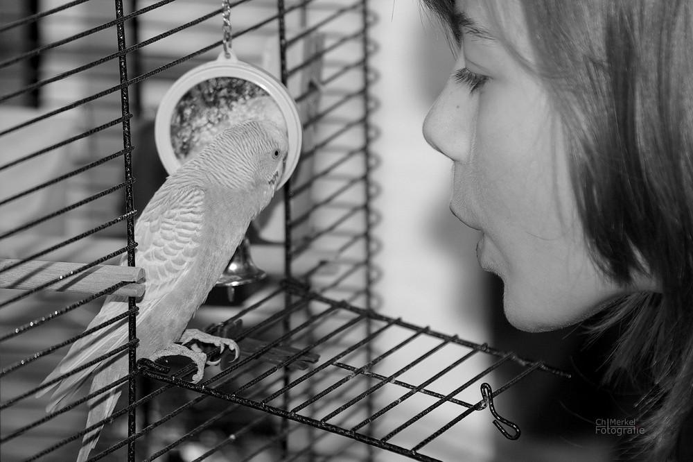 Vogelliebe