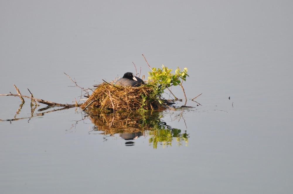 Vogelnest am Morgen
