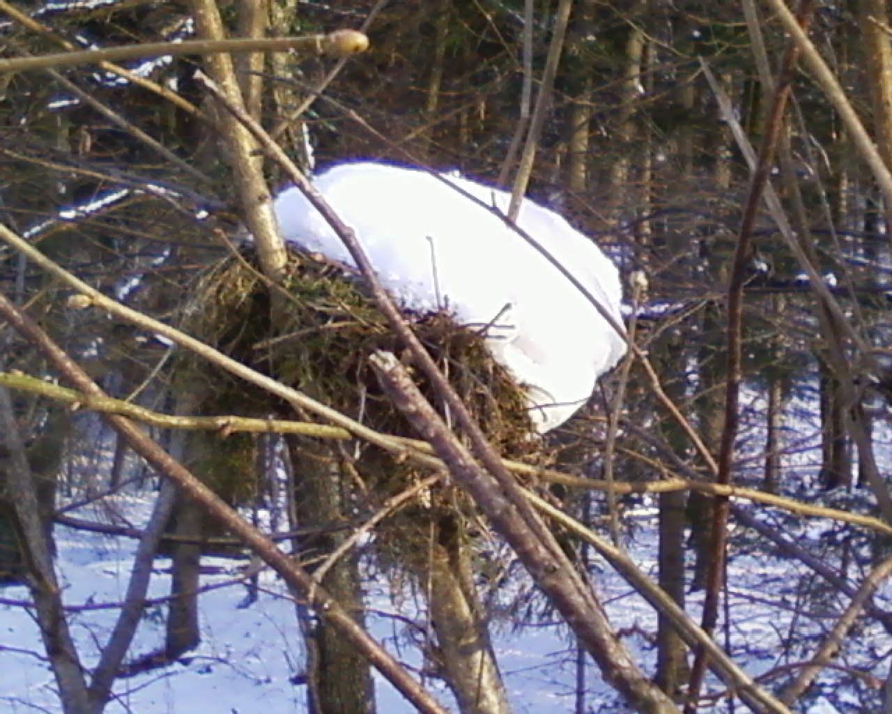 VogelNest VOLL Schnee