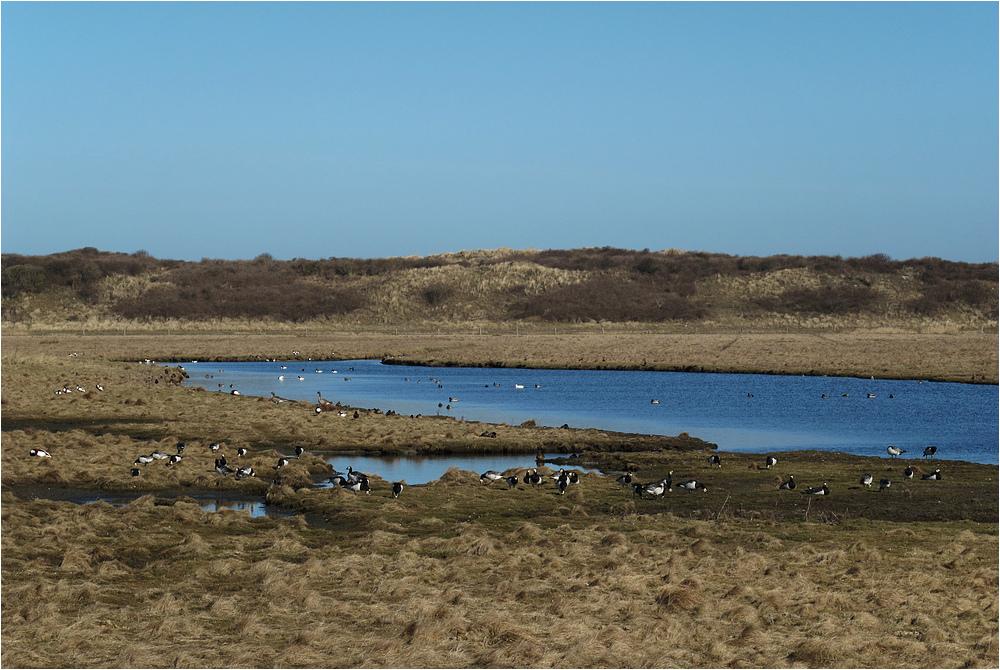 Vogelparadies auf Langeoog