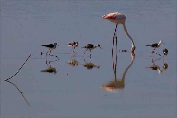 Vogelparadies Coto de Doñana