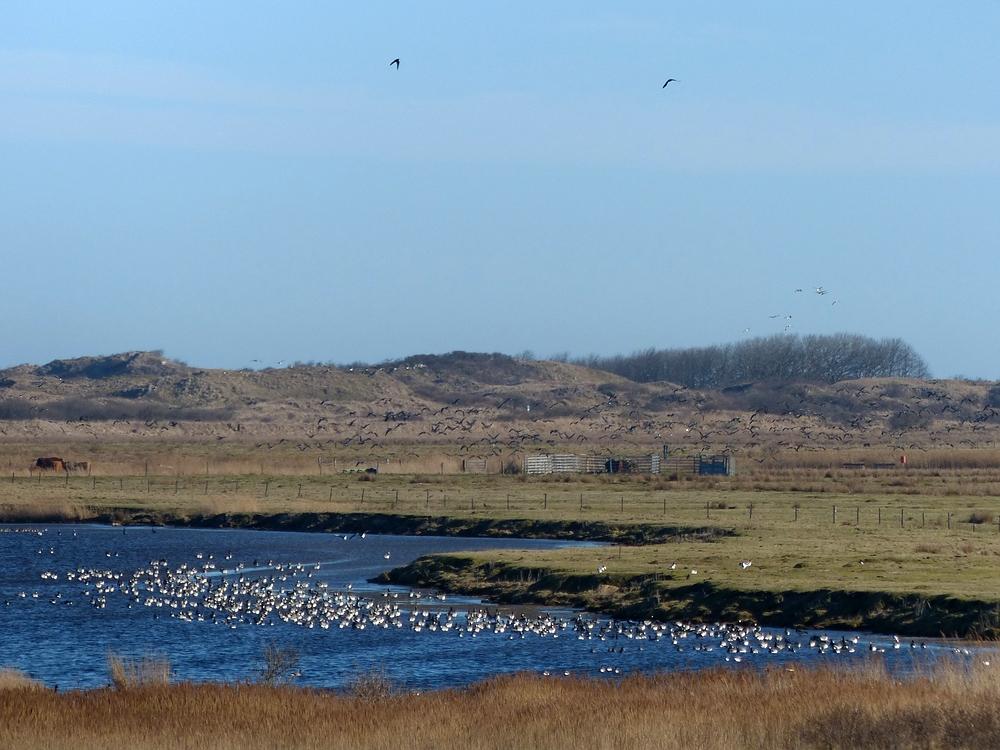 Vogelparadies im Borkumer Ostland