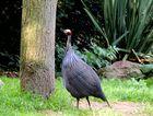 Vogelpark 3