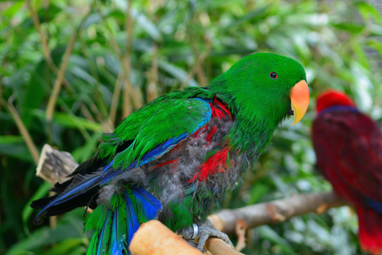 Vogelpark Detmold