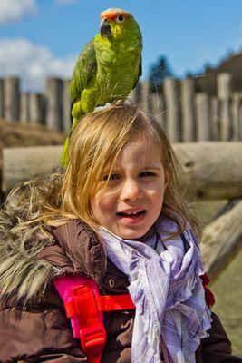 Vogelpark Detmold Papagei auf dem Kopf