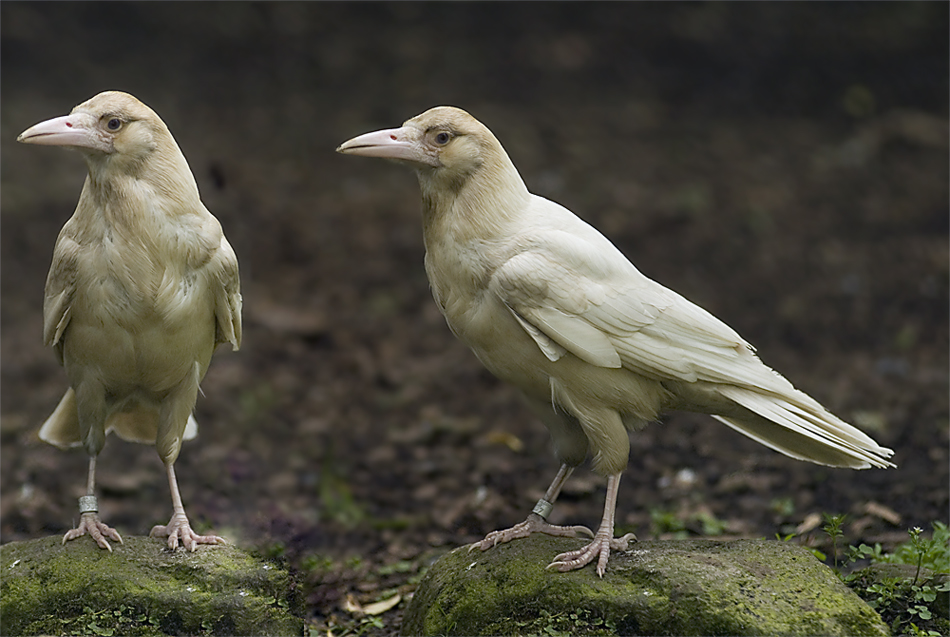 Vogelpark III