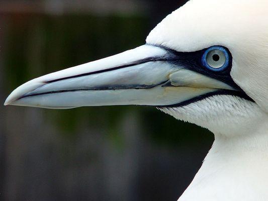 Vogelprofil