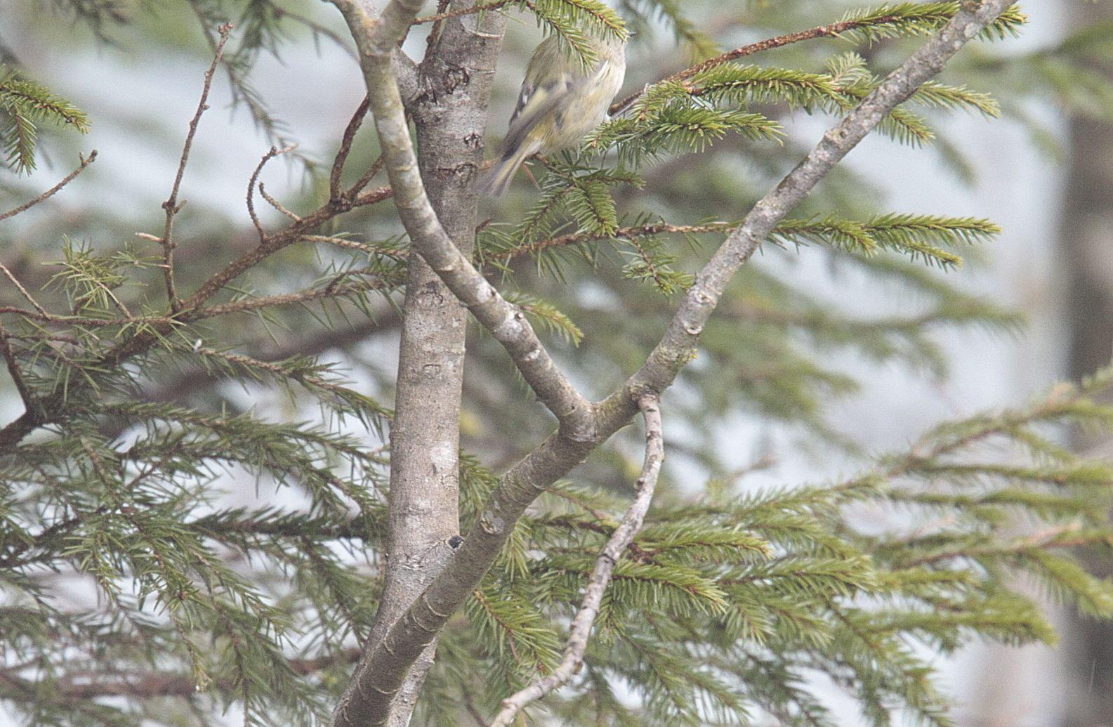 Vogelrätsel