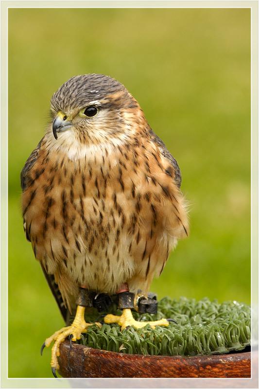 Vogelschau im Stirling Castle