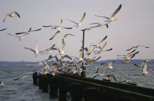 Vogelschule - Pausenglocke