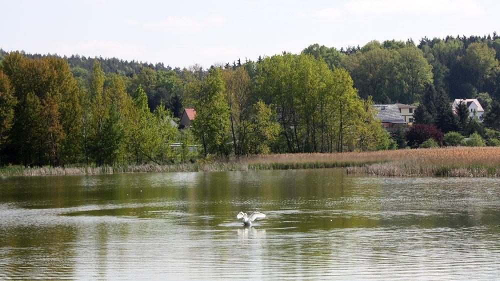 Vogelschutzgebiet am Hainspitzer See
