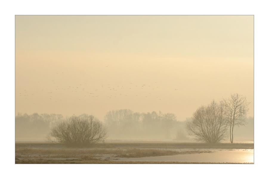 Vogelschwarm in eisiger Morgenluft