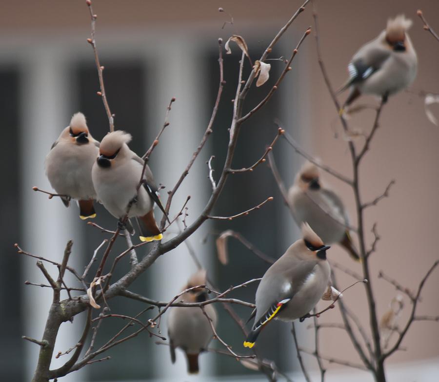 Vogelschwarm vor dem Fenster