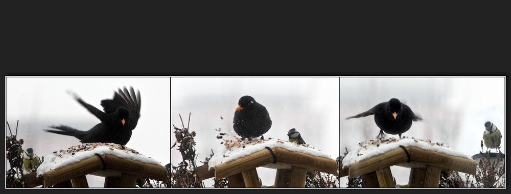 Vogelstripe