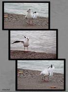 Vogeltanz