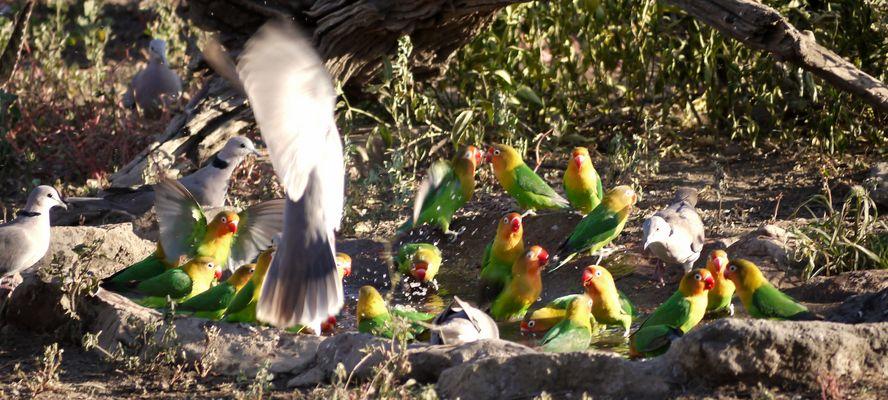 Vogeltränke in der Ndutu Lodge