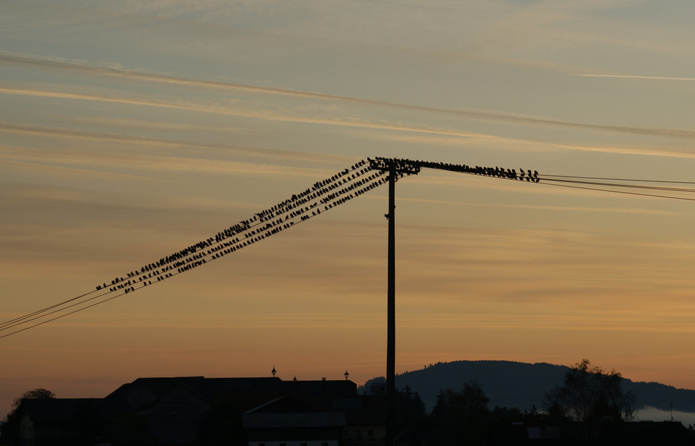 Vogelversammlung am Morgen