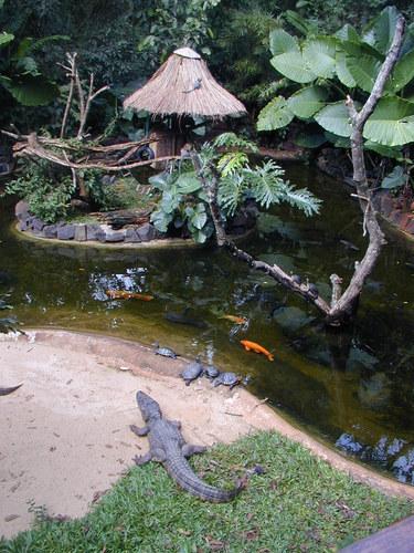 Vogelzoo nahe der Grenzstadt FOZ DO IGUAZU.