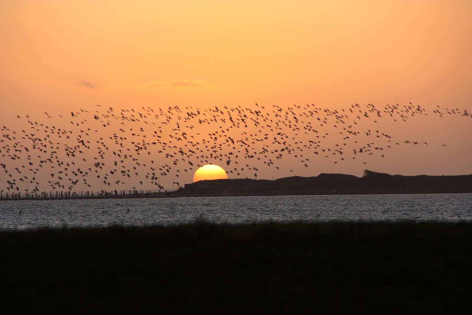 Vogelzug am Abend